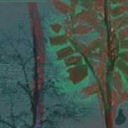 Tree Shadows At Midnight Art Print