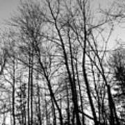 Tree Silhouette Bw Art Print
