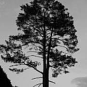 Tree Silhouette In The Dark Art Print