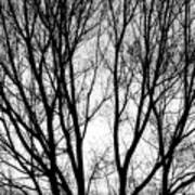 Tree Silhouettes In Black And White Art Print