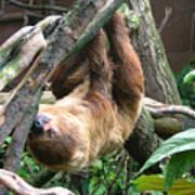 Tree Sloth Art Print
