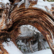 Tree Stump Arch Art Print