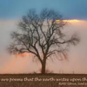 Tree - Sunset - Quotation Art Print
