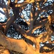 Tree Tangle 0551 Art Print
