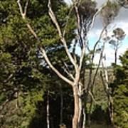 Tree Tops And Beyond Art Print
