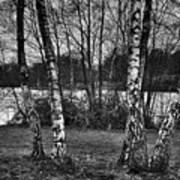 Tree Quartet And The Lake Art Print