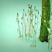 Tree Trunk In Snow Art Print