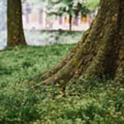 Tree Trunks In Spring Art Print