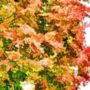 Tree With Autumn Leaves Art Print