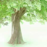 Treeness Art Print
