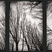 Treeology Art Print