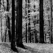 Trees #2 Art Print
