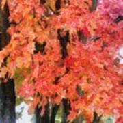 Trees Aflame Art Print