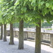 Trees All In A Row Art Print