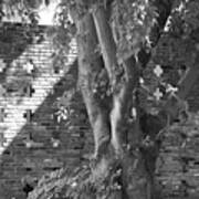 Trees And Brick Crosses Art Print