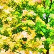 Trees And Leaves 1 Art Print
