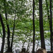 Trees At Lake Schlachtensee Art Print