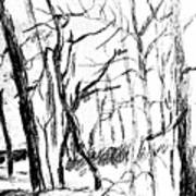 Trees At My House Art Print