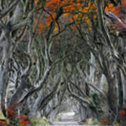Trees Embracing Art Print