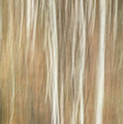 Trees Ethereal Thicket Art Print