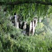 Trees Fallingwater  Art Print