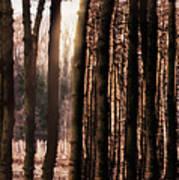 Trees Gathering Art Print