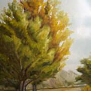 Trees In Boulder Art Print