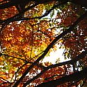 Trees In Fall Fashion Art Print