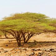 Trees In Kenya Art Print