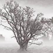 Trees In Mist- St Lucia Art Print