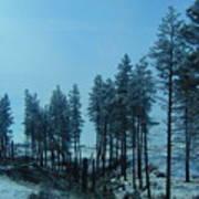 Trees In Northwest Art Print