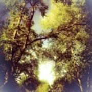 Trees In Summer Art Print