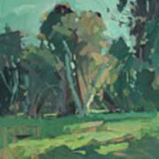 Trees In Sunlight Art Print