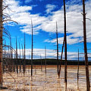 Trees In The Midway Geyser Basin Art Print