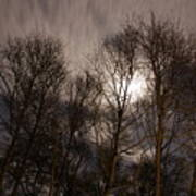 Trees In The Nigh Art Print