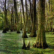 Trees In The Swamp Art Print