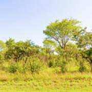 Trees In Zambia Art Print