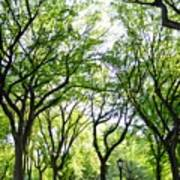 Trees Of Central Park, Nyc Art Print
