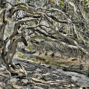 Trees Of Ziarat Art Print