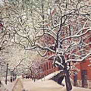 Trees On Franklin Art Print