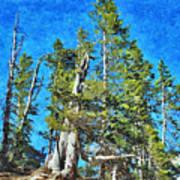 Trees On The Edge 2 Art Print
