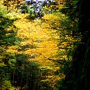Trees Over The Flumes Gorge Art Print