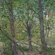 Trees Paris, July 1887 Vincent Van Gogh 1853  1890 Art Print