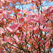 Trees Pink Spring Dogwood Flowers Baslee Troutman Art Print