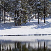Trees Reflecting In Duck Pond In Colorado Snow Art Print