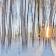 Trees, Snow And Golden Light Abstract Art Print
