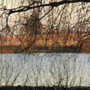 Trees With A Reflection Art Print