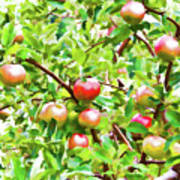 Trees With Red Apples In An Orchard Art Print