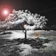 Trees With Science Fiction Sky 91774031 Art Print