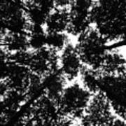 Treetops Art Print